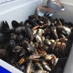 Glen Afton Golf Course PEI Aquaculture Alliance Mussels Oysters and Fin Fish