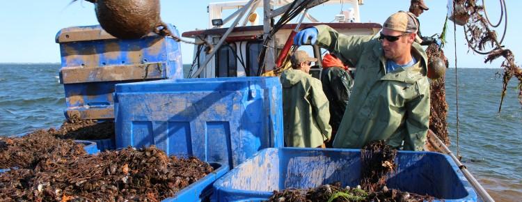 Go Deep Mussel Sock Prince Edward Island Harvest