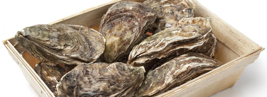 6th International Oyster Symposium Cape Cod Banner